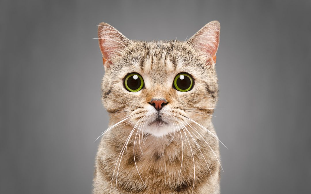 Before the presentation – are you having kittens? Test yourself!