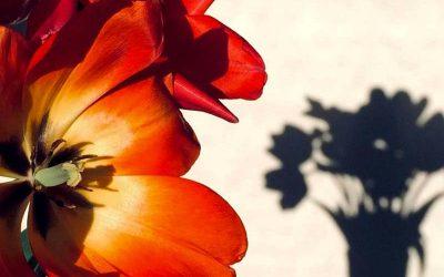Vorsicht vor Schnittblumen
